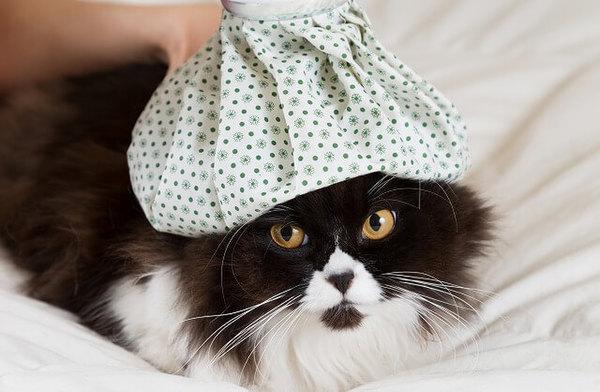 猫からのSOSかも?!猫がよだれをだす6つの原因