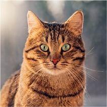 猫がグルメって実は嘘?!猫の噂に混ざった3つの『嘘』の話