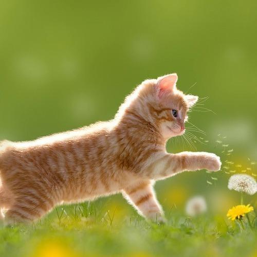 猫との別れがくる前に。知っておきたい『ペットの葬儀』のこと