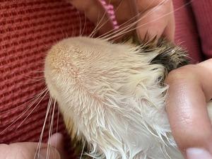 猫の顎に黒いブツブツが!うちの子もなった!猫ニキビとは?
