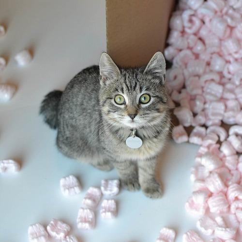 失敗から学ぶ!猫との引っ越しで気を付けたいことって?