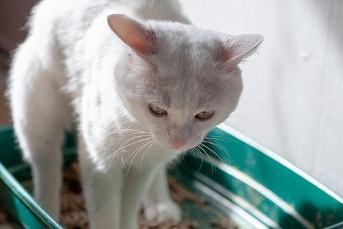 【獣医師監修】猫の便秘を解消しよう!原因・症状・対処法