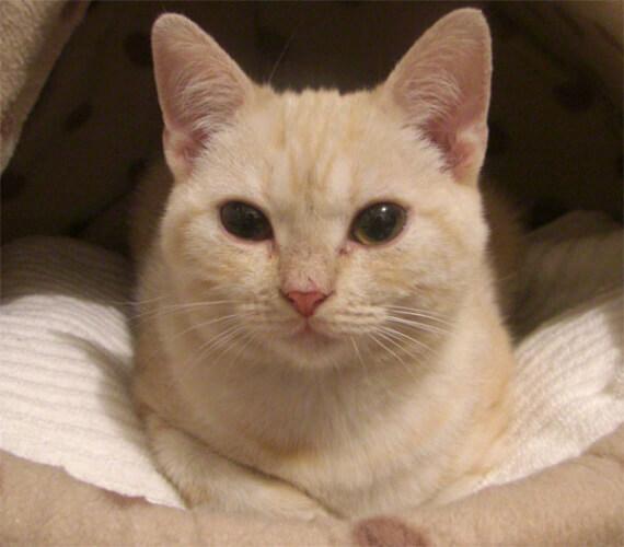 種類 猫 毛色