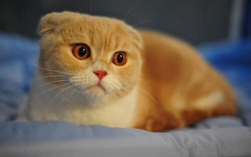 ネコの発熱:ネコの平熱は38~39度
