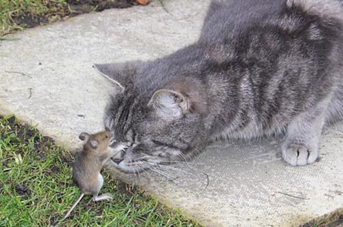 ネズミ 11