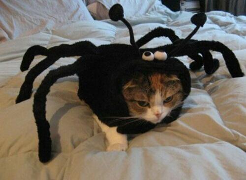 猫 ハロウィン