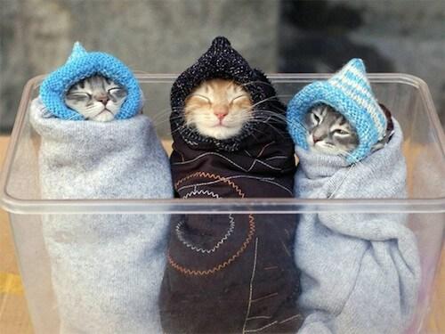 猫の平熱を知っておこう