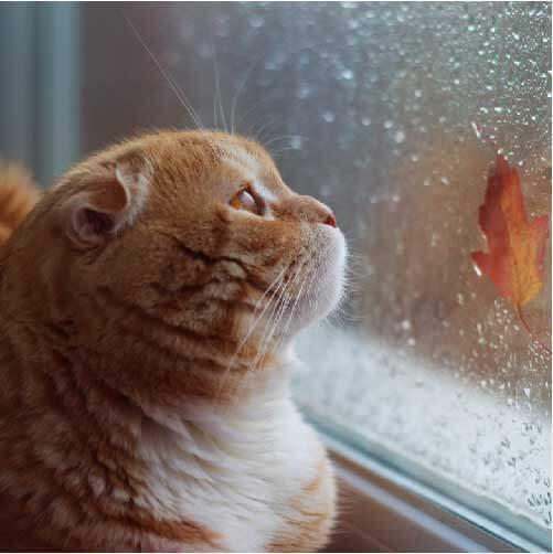 後悔しないため。知っていてほしい猫が最期に見せる4つの行動