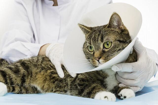猫は傷を舐めても治せない?傷口を舐める時の正しい対処法は?